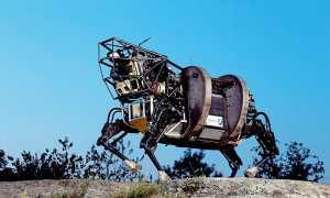 Роботы-животные: топ-10 невероятных механических питомцев, столь схожих со своим прототипом